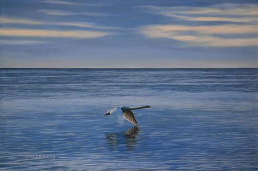 Evening Swan by Allan OMarra