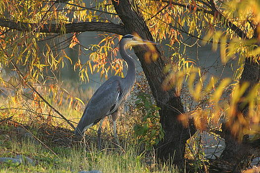 Evening Watch by Leslie  Sims