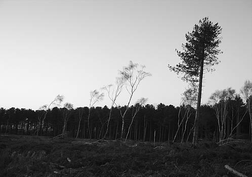 Stewart Scott - Evening Wood