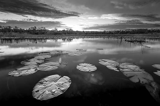 Debra and Dave Vanderlaan - Everglades at Sunset in Black and White