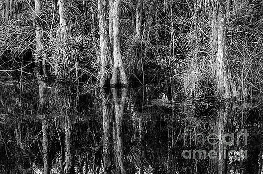 Bob Phillips - Everglades Cypress Trees and Reflections 2