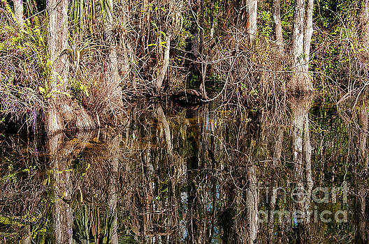 Bob Phillips - Everglades Cypress Trees and Reflections Two