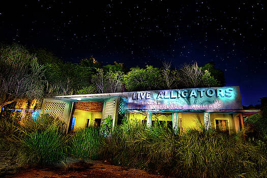 Everglades Gatorland by Mark Andrew Thomas