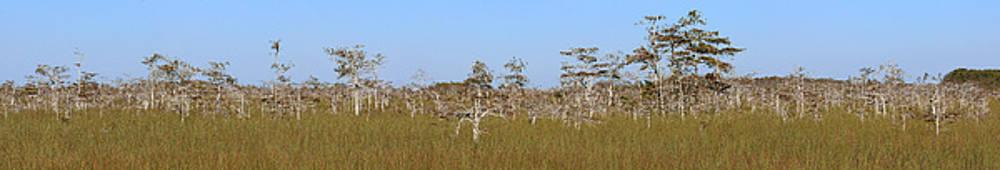 Everglades Panorama by John Rowe