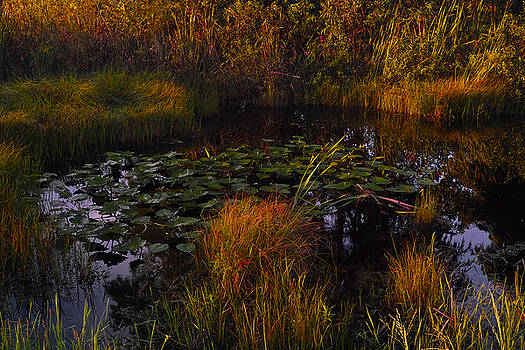 Everglades Pond by Roberto Aloi