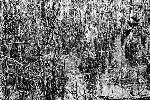 Bob Phillips - Everglades Swamp Five 2
