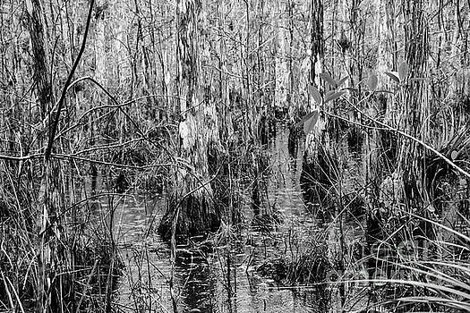 Bob Phillips - Everglades Swamp Four 2
