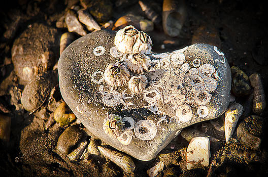 Every Heart Carries a Burden by Joy Gerow