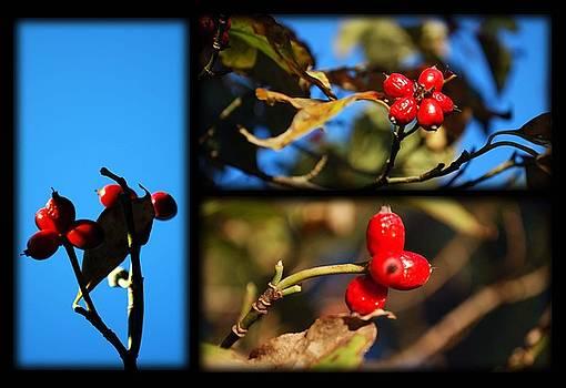 Evidence of Fall series by Keri Renee