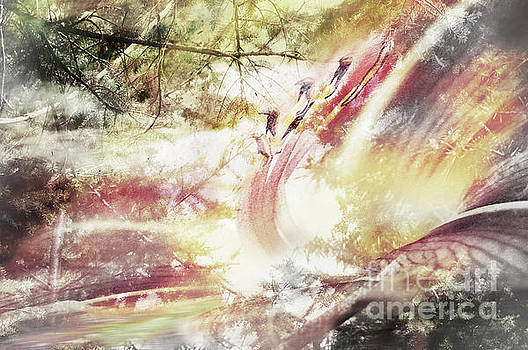 Evolve  by Janie Johnson