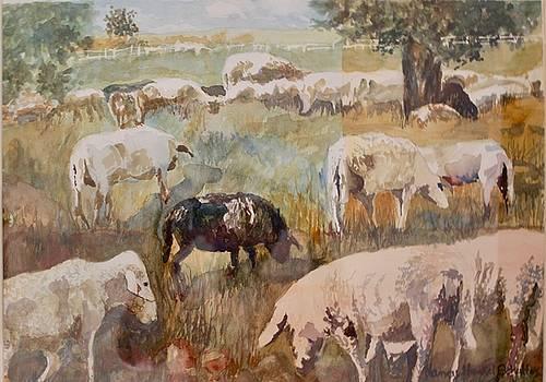 Ewe Are Mine by Nancy Henkel Schulte