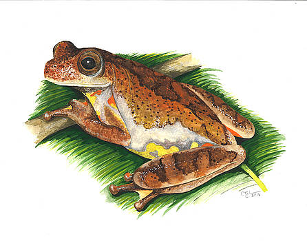 Executioner treefrog by Cindy Hitchcock