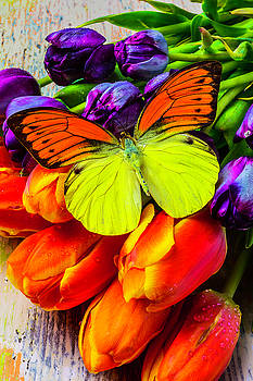 Exotic Butterfly On Tulips by Garry Gay