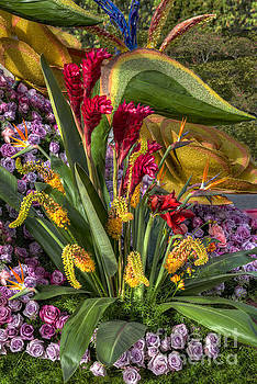 Exotic Flowers by David Zanzinger