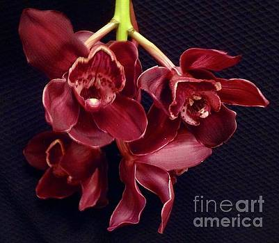 Exotic Orchids by Jenny Lee