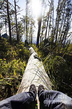Explore tasmania by Jorgo Photography - Wall Art Gallery