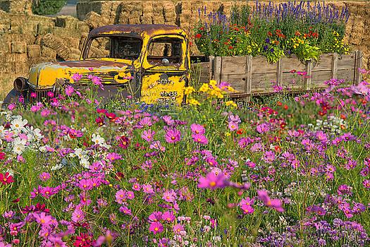 Explosion of Wildflowers by Darlene Bushue