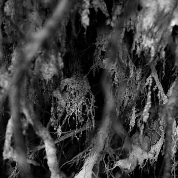Exposed Tree Roots 004 by Noah Weiner