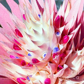 Expressive Bromeliad Photo C3517 by Mas Art Studio