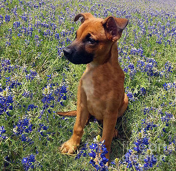 Expressive Puppy and Bluebonnets Photo A19316 by Mas Art Studio