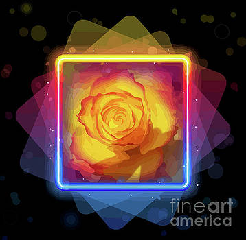 Exquisite Golden Rose by Clive Littin