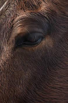 Eye of a Friend  by Steve Gravano