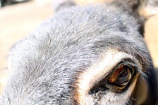 Eye of the Burro by Nancy Furstinger