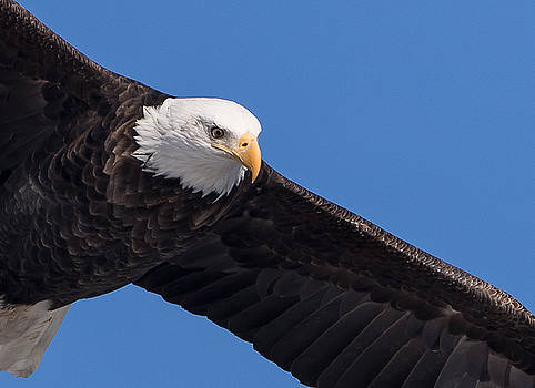 Eye of the Eagle by Allen Ahner
