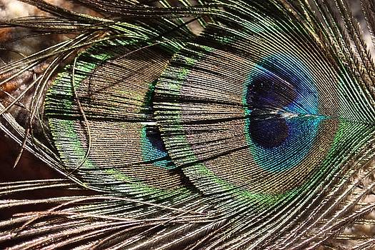 Eye of the Feather by Sheryl Chapman Photography