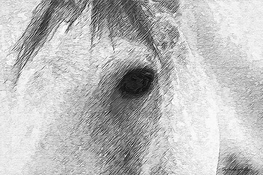Eye of the Horse by Barbara A Lane