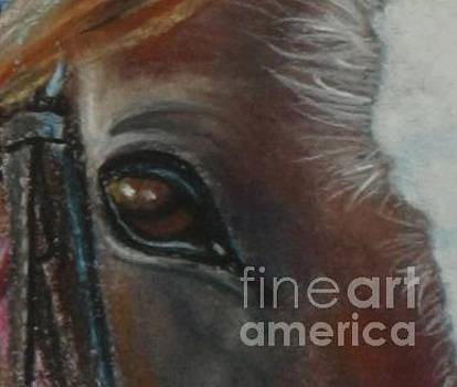 Eye of the Horse by Linda Eversole