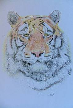 Eye of the Tiger by Dan Hausel