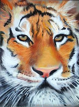 Eye of The Tiger by Sharon Wright
