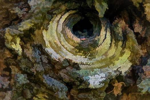 Mick Anderson - Eye Of The Tree Art
