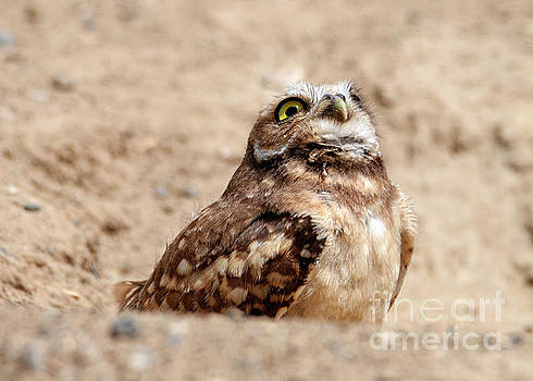 Eye on the Hawk by Mike Dawson
