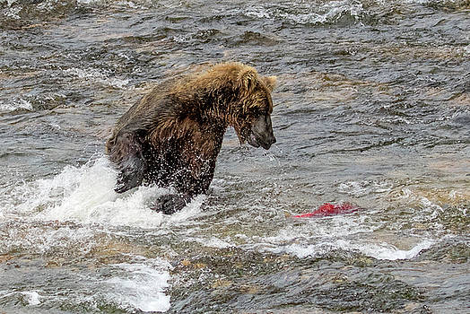 Eye on the Sockeye by Cheryl Strahl