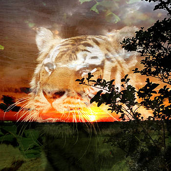 Eyes of a Tiger by mindin Online