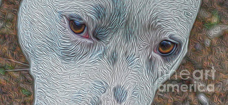 Eyes Of Concern by Kim Pate