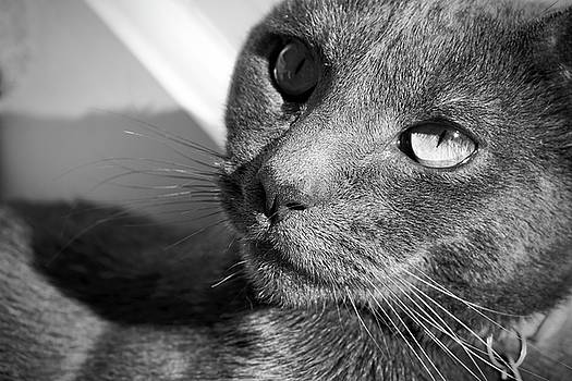 Eyes of Russian Blue by Jessica Bouloutian