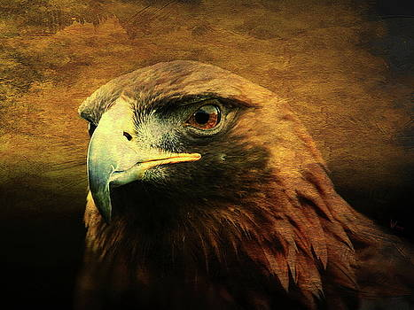 Wingsdomain Art and Photography - Eyes of the Golden Hawk