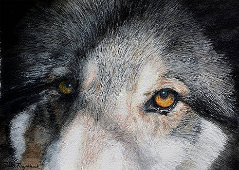 Eyes of the Wolf Dog by Robbie Fitzpatrick