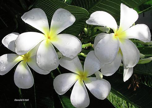 F1 Plumeria Frangipani Flowers Hawaii by Donald k Hall
