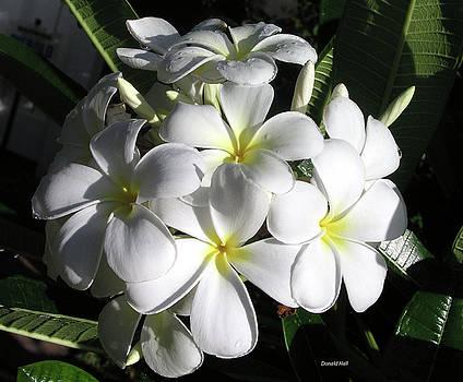 F13-Plumeria Flowers by Donald k Hall