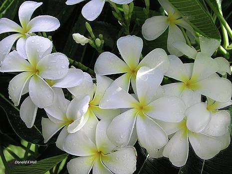 F2 Plumeria Frangipani Flowers Hawaii by Donald k Hall