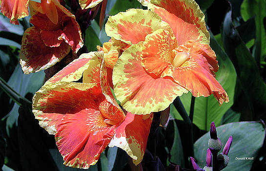 F24 Cannas Flower by Donald k Hall
