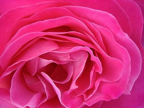 Fabric of Rose by Jacqueline Migell
