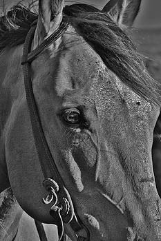Face by Crystal Socha