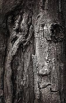 Face in a tree by JoAnn Lense