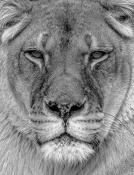 Face of a Queen by Eric Albright