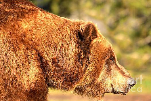 Adam Jewell - Face Of The Kodiak